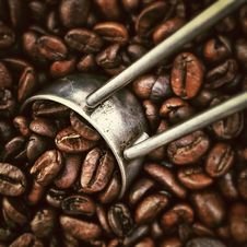 Free Cocoa Bean, Caffeine, Jamaican Blue Mountain Coffee, Coffee Royalty Free Stock Images - 99192479