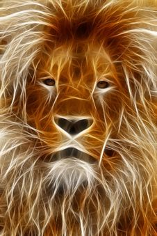 Free Wildlife, Lion, Mammal, Whiskers Stock Images - 99192644
