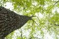 Free Upward Angle Of Tree Stock Photography - 9923882