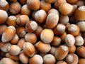 Free Organic Hazelnuts Royalty Free Stock Photo - 9925705