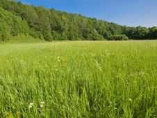 Free Green Meadow Royalty Free Stock Photo - 9920685