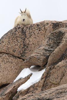 Free Mountain Goat Sitting On Big Rocks Stock Image - 9921011
