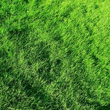 Free Grass Royalty Free Stock Photography - 9921637
