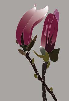 Free Magnolia Buds Stock Image - 9922241