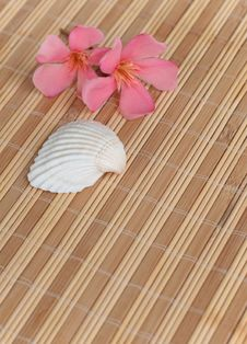 Free Pink Tropical Flowers And A Seashell Stock Photos - 9922363