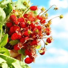 Free Strawberry Royalty Free Stock Photo - 9922715