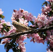 Free The Bird Royalty Free Stock Image - 9923726