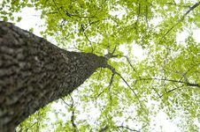 Free Upward Angle Of Tree Stock Photography - 9923882