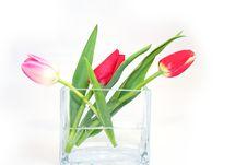 Free Tulips Stock Photos - 9925123