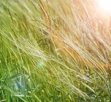 Free Flecks Of Sunlight At Sunset Royalty Free Stock Photography - 9925257
