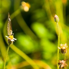 Free Butterfly Foraging Amongst Wild Flowers Stock Images - 9925374