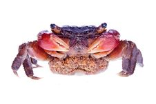 Free Crab Stock Images - 9925964