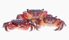 Free Crabs Royalty Free Stock Images - 9925969