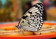 Free Butterfly Stock Image - 9926111