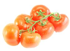 Free Tomatoes Royalty Free Stock Photos - 9926168