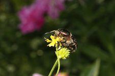 Free Bug Royalty Free Stock Image - 9926226