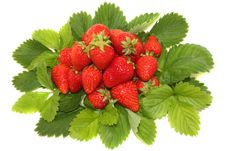 Free Strawberry With Leaves Royalty Free Stock Photos - 9926328
