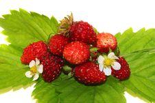 Free Wild Strawberry Stock Photos - 9926423