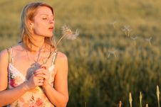 Free Woman And Dandelion Royalty Free Stock Image - 9926466