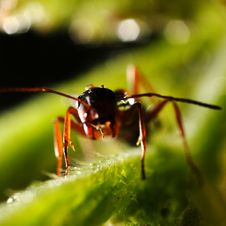 Free Ant On The Grass. Stock Images - 9926564