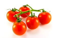 Free Tomatoes On The Vine Stock Photography - 9926642