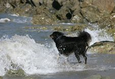 Free Border Collie Dog On Beach Stock Photography - 9926662