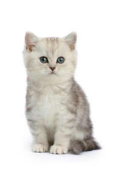 Free Kitten Stock Photography - 9927912