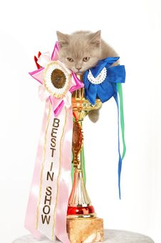 Kitten In A Large Golden Trophy Royalty Free Stock Photography