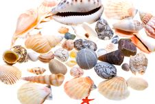 Free Beautiful Seashells Isolated On White Stock Photo - 9929700