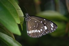 Free Butterfly, Moths And Butterflies, Insect, Brush Footed Butterfly Stock Photos - 99200333