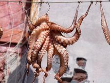 Free Octopus, Cephalopod, Invertebrate, Marine Invertebrates Stock Images - 99202714