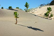 Free Sand, Aeolian Landform, Singing Sand, Dune Stock Images - 99211574