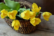 Free Yellow, Flower, Flowerpot, Floristry Royalty Free Stock Photography - 99213247