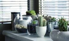 Free Plant, Flowerpot, Cactus, Houseplant Stock Image - 99213921