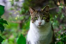 Free Cat, Green, Fauna, Whiskers Royalty Free Stock Photos - 99216938