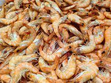 Free Shrimp, Seafood, Dendrobranchiata, Caridean Shrimp Stock Photos - 99217603