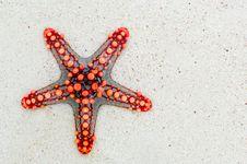 Free Starfish, Invertebrate, Echinoderm, Marine Invertebrates Stock Photo - 99223820