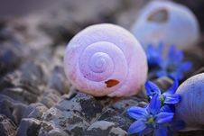 Free Purple, Close Up, Seashell, Organism Royalty Free Stock Images - 99230719