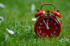 Free Grass, Lawn, Close Up, Meadow Royalty Free Stock Photo - 99231075