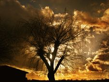 Free Sky, Nature, Tree, Woody Plant Stock Photos - 99267813