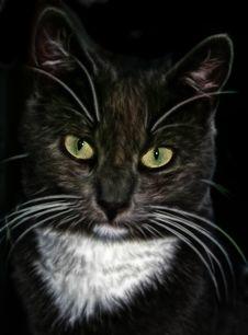 Free Cat, Black Cat, Whiskers, Mammal Royalty Free Stock Image - 99267826