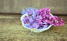 Free Flower, Purple, Plant, Lilac Royalty Free Stock Image - 99270976
