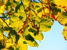 Free Leaf, Autumn, Yellow, Branch Royalty Free Stock Photography - 99271477