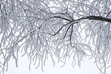 Free Branch, Tree, Black And White, Twig Stock Image - 99276901