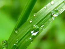 Free Dew, Water, Green, Drop Stock Image - 99277041