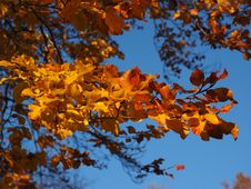Free Autumn, Sky, Leaf, Branch Royalty Free Stock Image - 99277636