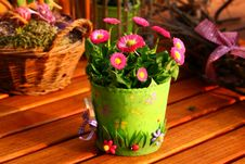 Free Flower, Flowerpot, Plant, Floristry Royalty Free Stock Photos - 99285318