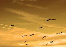Free Sky, Flock, Bird Migration, Bird Stock Image - 99295951