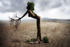 Free Tree, Sky, Plant, Vacation Royalty Free Stock Photography - 99296027