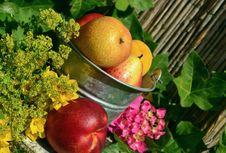 Free Natural Foods, Fruit, Local Food, Food Stock Image - 99298401